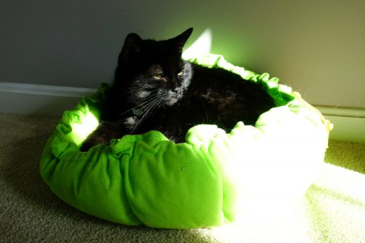 Anya in her green cat bed
