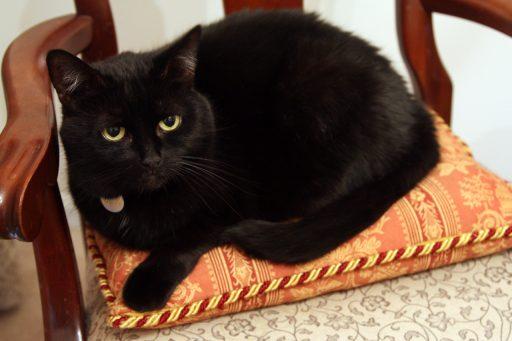 Anya on a cushion